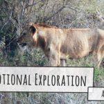 JMOTION SCHOOL Escursione Africa Emotional Exploration